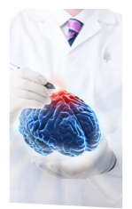 doctor holding a brain model